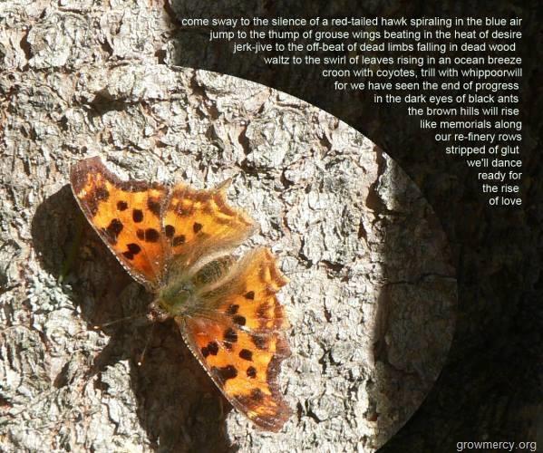 butterflyonspruce1