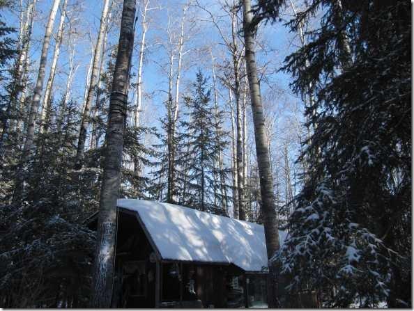 cabinpoplars