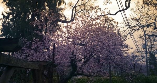 cherrytree@J&Ds