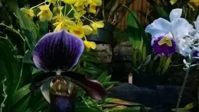 darkorchid