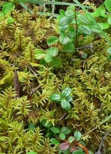 ferns&leaves&shoots