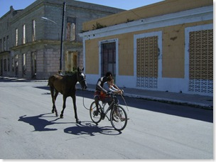 horse and bicycle