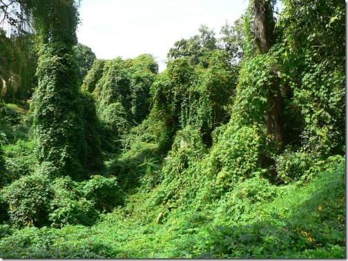 kauai_foliage