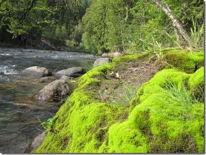 moss&water2