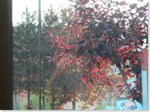 Red Leaves Through a Window (sm)