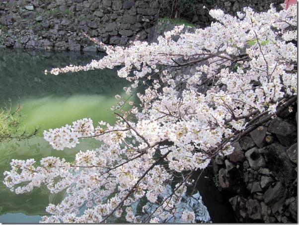 sakura_kokura