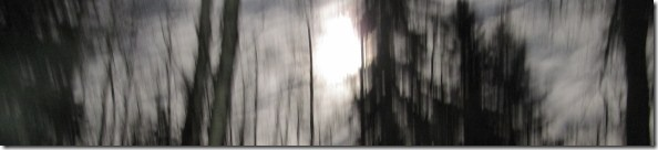 treesmooncabin