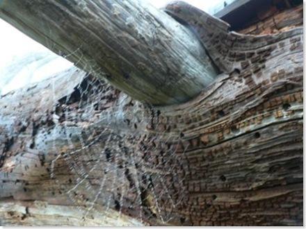 Whitby Island Web on wood